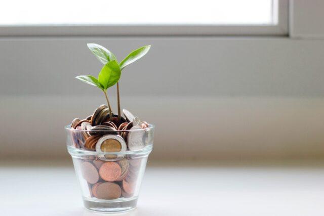 小さなお金の木